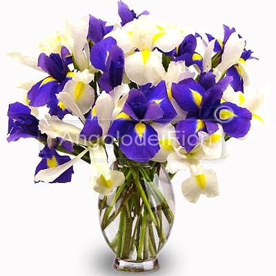 Bouquet di Iris Bianchi e Blu