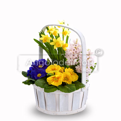 Basket with seasonal plants
