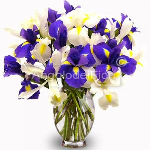 Bouquet of White and Blue Iris