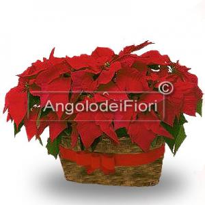 Basket of Poinsettias Red