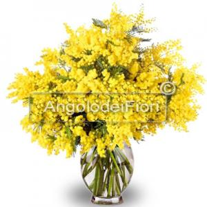 Bouquet of Mimosa